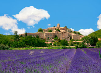 Provence scene with lavender in bloom